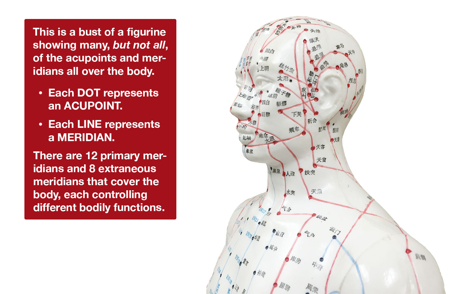The bust of a figurine showing most, but not all, of the acupuncture points and meridians all over the body.