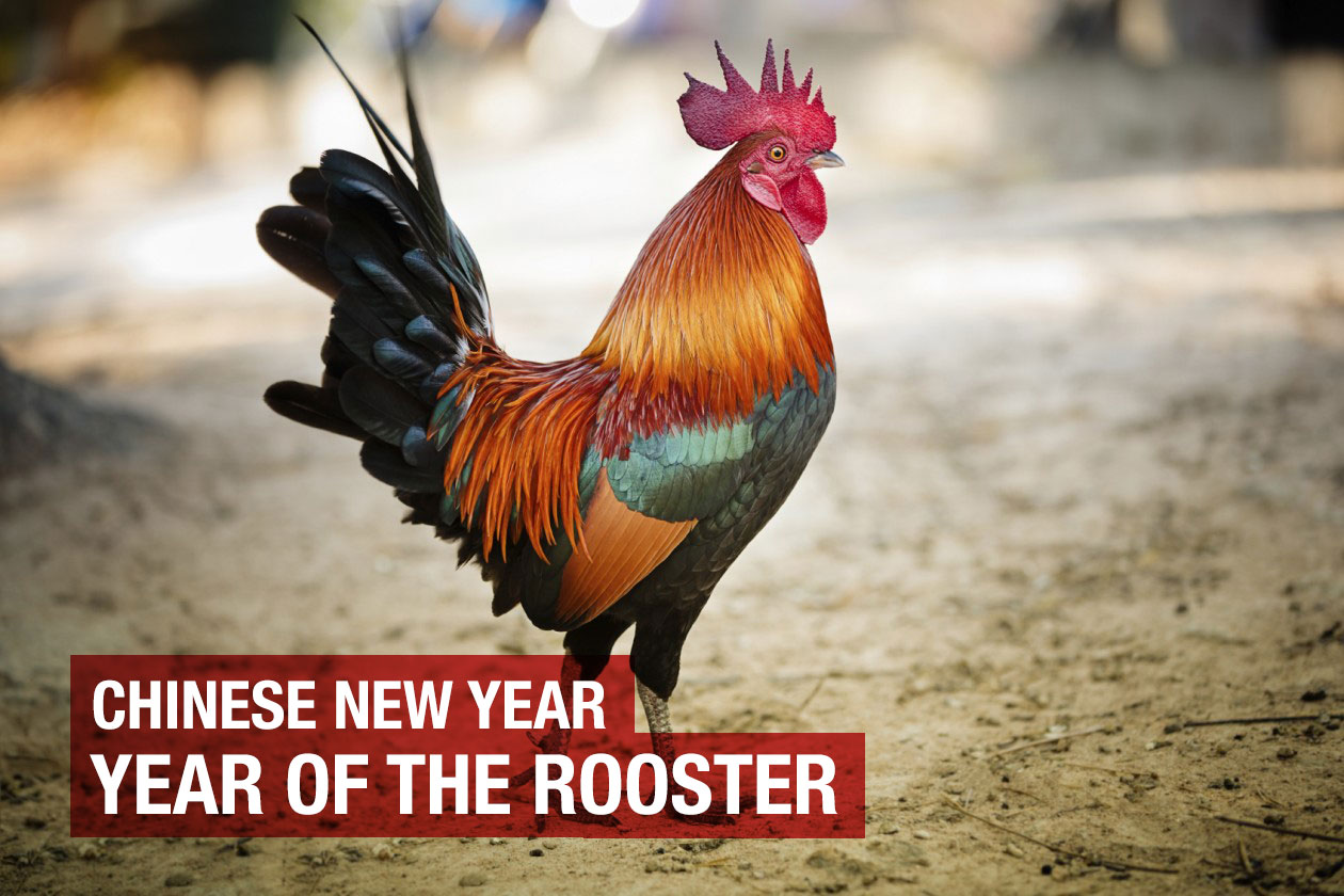 chinese new year year of the rooster g u0026l acupuncture and